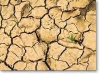 evaluacion de suelos contaminados