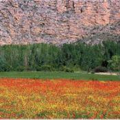 Mapa de Impactos en el Patrimonio Natural de Cataluña